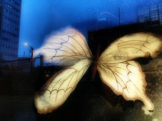Butterfly night