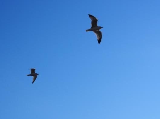 Blue Sky Joy