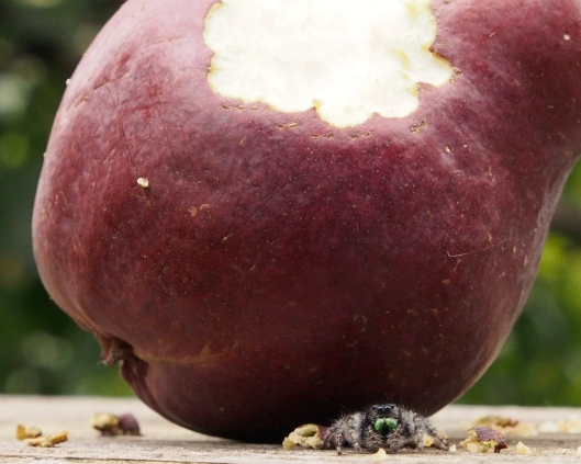 The Spider and the Pear
