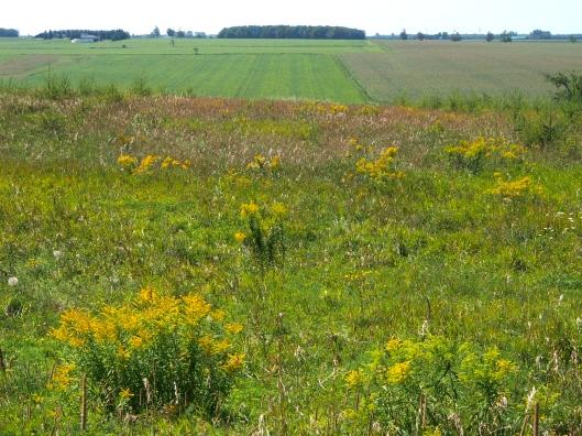 Ontario Farm Country